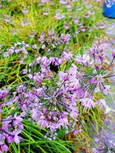 UBC Flower 2