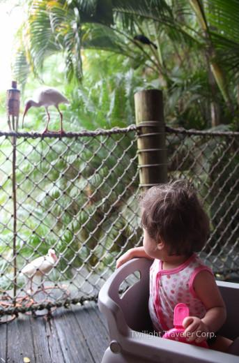 パームビーチ 動物園