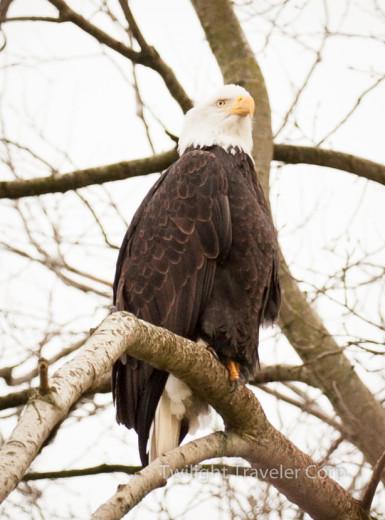 Eagle S 016-2