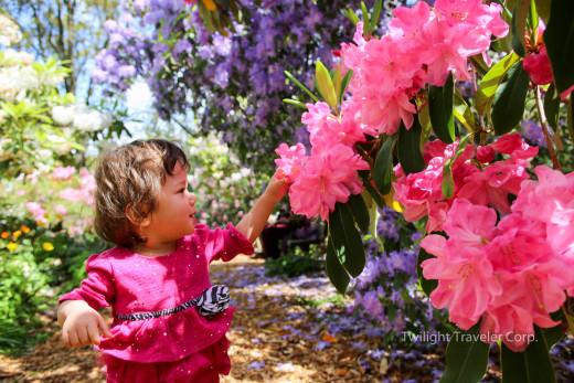 VanDusen 石楠花