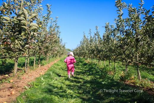 りんご狩り Taves Family