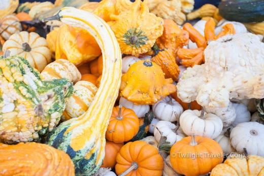 かぼちゃ Taves Family