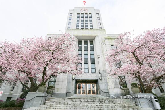 バンクーバー市役所桜