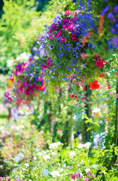 ブッチャートガーデン 花かご