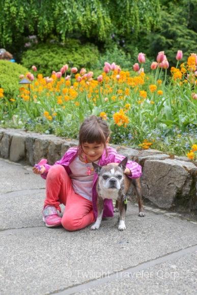 ブッチャードガーデン&犬