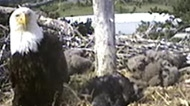 eagles-nest_190.jpg