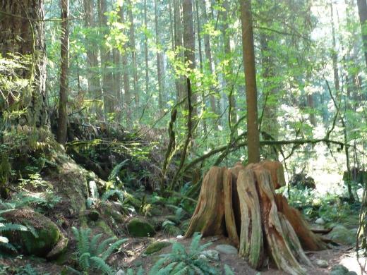 身近な森林浴!リンバレーでハイキング