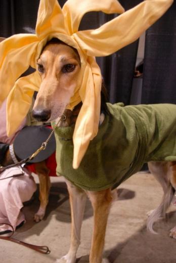 Dog Show Canada 09-3s.jpg