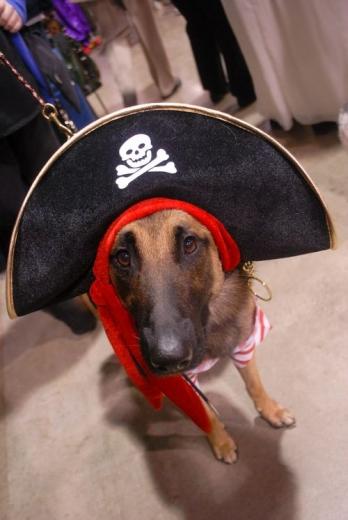 Dog Show Canada 09-12s.jpg