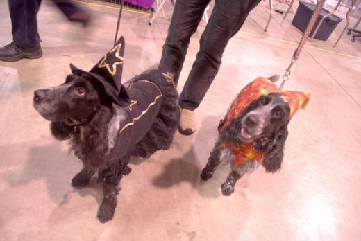 Dog Show Canada 09-25-2s.jpg