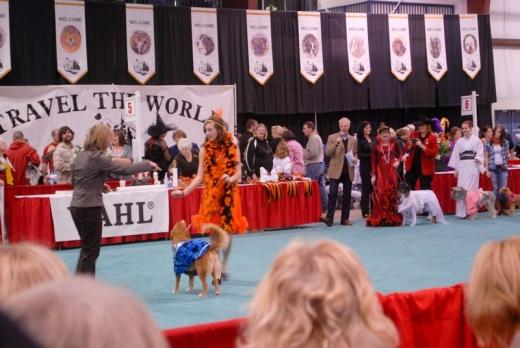 Dog Show Canada 09-11s.jpg